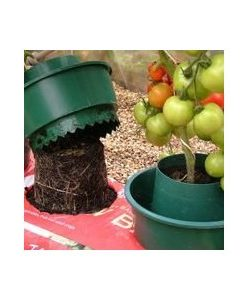 How to grow organic produce at home