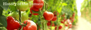 History of the Tomato