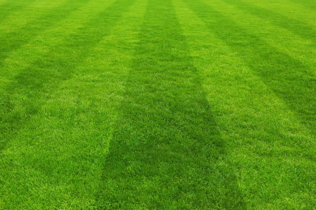 lawn care tips best looking lawns garden universal