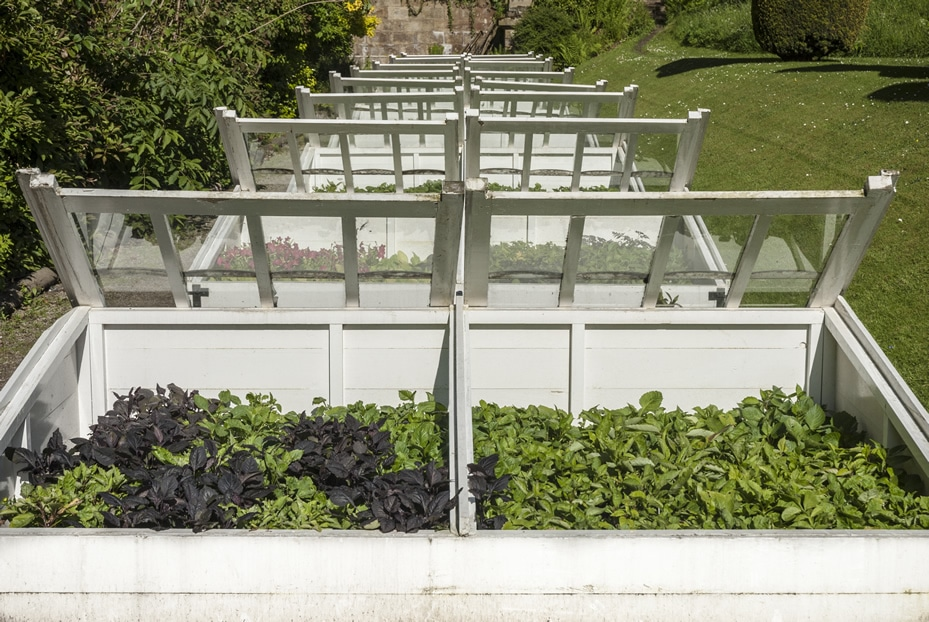 Garden Coldframe ideal to protect plants in winter frosts